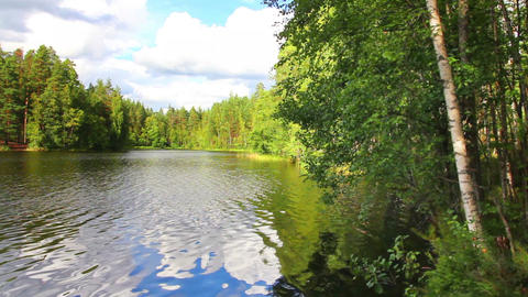 summer landscape with lake in forest Footage