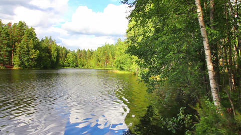 summer landscape with lake in forest Stock Video Footage