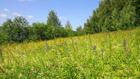 landscape with summer meadow and butterflies Stock Video Footage