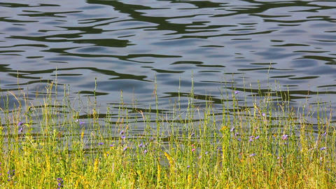 water ripple on pond and grass Stock Video Footage
