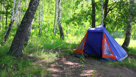 camping tent in summer birch forest Footage