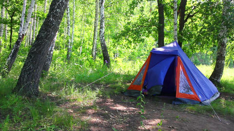 camping tent in summer birch forest Stock Video Footage
