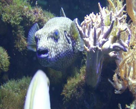 closeup jellyfish Stock Video Footage