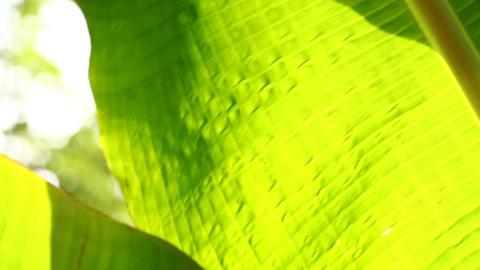 leaf Footage