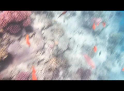hrg 02 Stock Video Footage