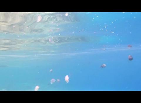 hrg 08 Stock Video Footage