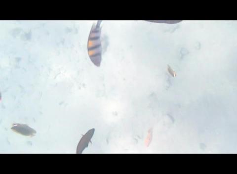 hrg 18 Stock Video Footage