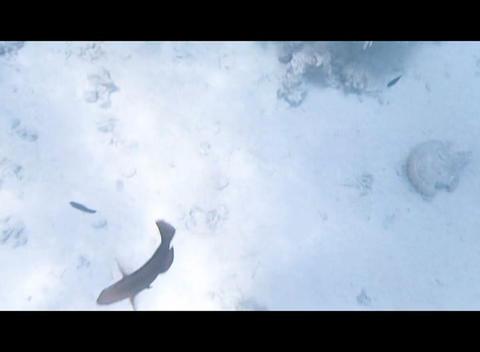 red sea snorkeling Stock Video Footage