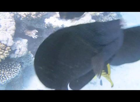 red sea snorkeling Footage