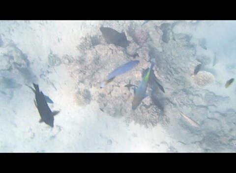 red sea Stock Video Footage