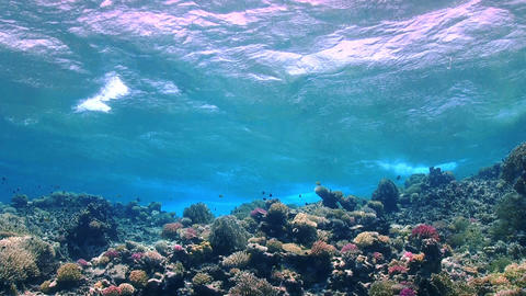 Waves of the sea over the coral reef Stock Video Footage