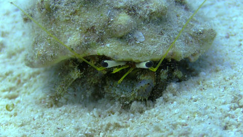 Hermit Crab in a coral reef Stock Video Footage