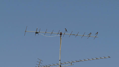 Swallows Sitting On A TV Antenna stock footage