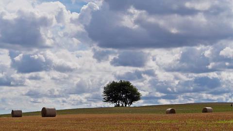 Lonely tree on big field Stock Video Footage