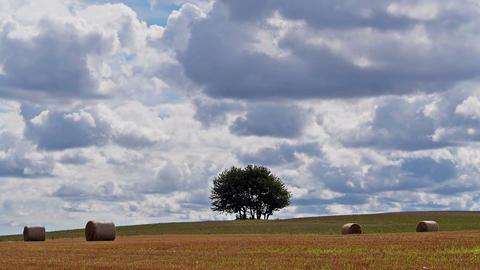 Lonely Tree On Big Field stock footage