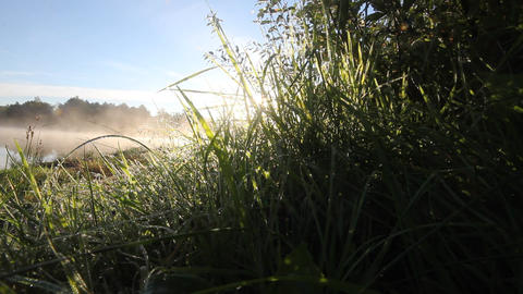 dew sun and morning Footage