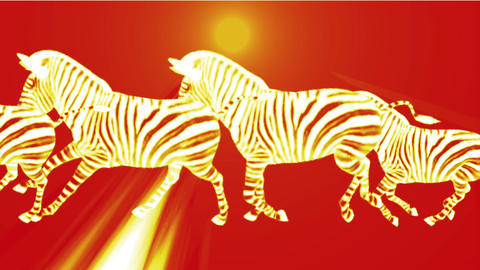 a group of zebra running & rays light Stock Video Footage