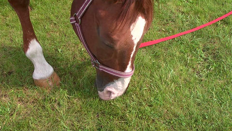 Horse eats the grass Stock Video Footage