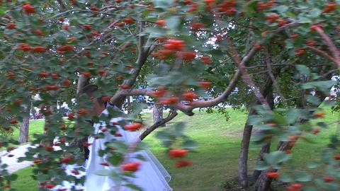 Wedding.Glidecam Stock Video Footage