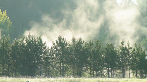 Fog Over Trees. Dawn stock footage