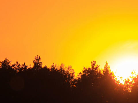 Sunset Through The Trees. Close-up. Time Lapse stock footage