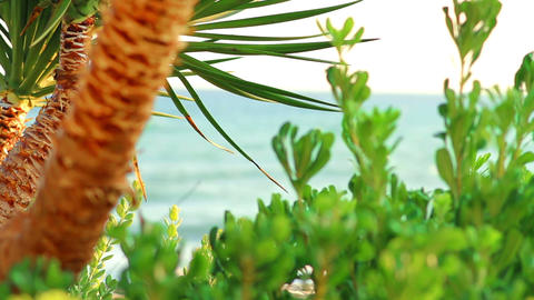 Palm trees and the sea Stock Video Footage