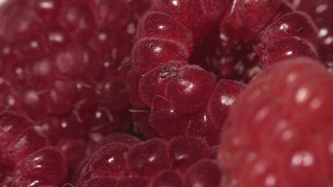 Ripe Raspberries. Closup stock footage