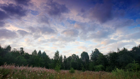 clouds behind the trees in the forest. Moiseevichi Stock Video Footage