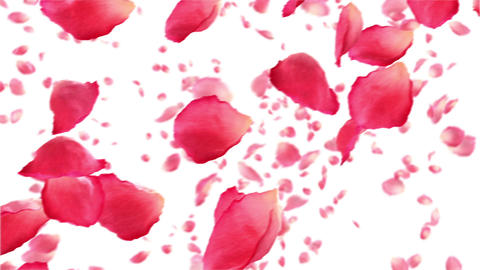 Flying rose petals on white. HD 1080. Looped anima Stock Video Footage