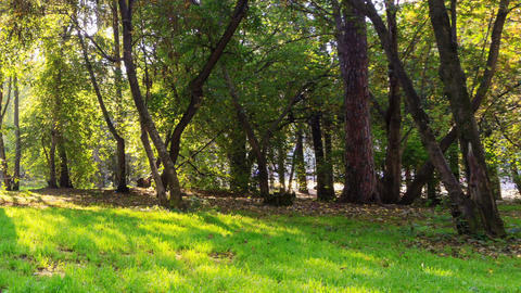Sunny day in the park. Panarama. Time Lapse Stock Video Footage