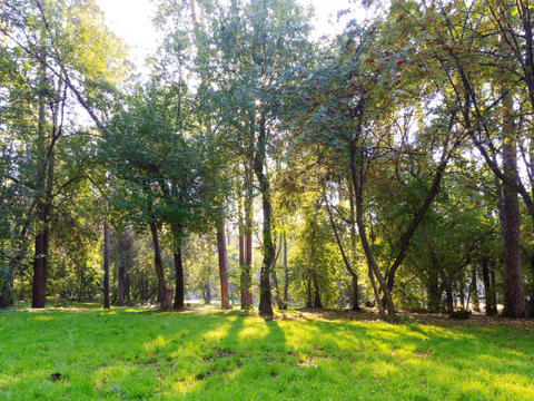 Sunny day in the park. Fixed distortion. Time Laps Stock Video Footage
