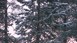 Winter north forest Stock Video Footage