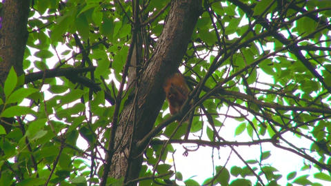 Squirrel on a tree Stock Video Footage
