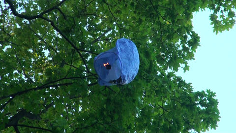 Paper lantern on a tree Stock Video Footage
