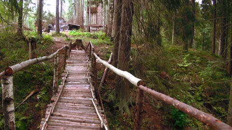 Wooden bridge across the stream in the forest Stock Video Footage