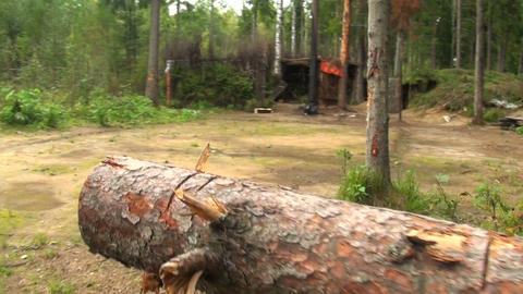 Military forces, trench in the forest Stock Video Footage