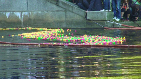 Rubber toy ducks floating on the river Footage
