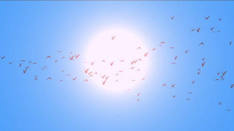 flock of pigeons birds fly over against sun,migratory birds Animation