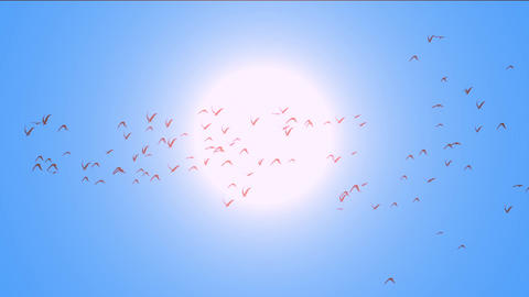 flock of pigeons birds fly over against sun,migratory birds Stock Video Footage