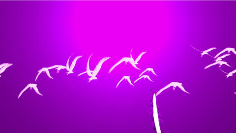 flock of birds fly over against purple sky,migratory birds Stock Video Footage