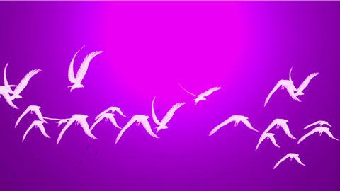 flock of birds fly over against purple sky,migratory birds Stock Video Footage