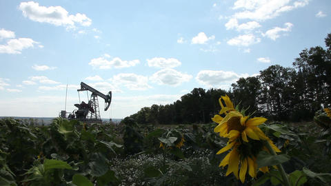 The oil pump in the field Stock Video Footage