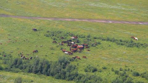 Wild Horses Stock Video Footage