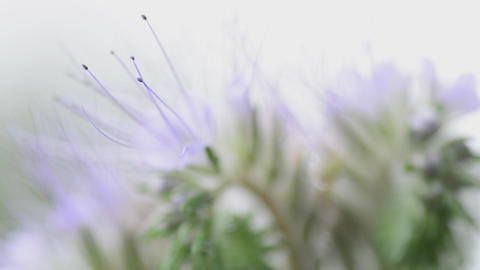 Delicate Flowers Macro. Motorised Dolly Shot stock footage