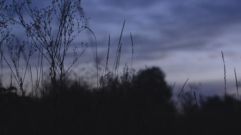 Silhouette of grass at sunset. Motorized dolly sho Stock Video Footage