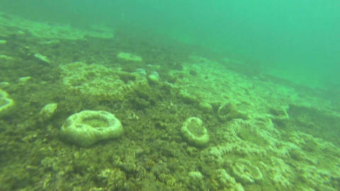 Underwater film of vivid coral reef with a tiny fi Stock Video Footage