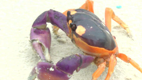 Halloween crab moving in the sand Stock Video Footage