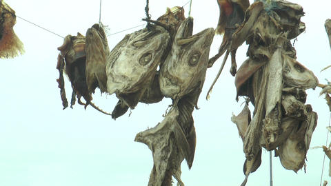 drying stockfish in iceland Stock Video Footage