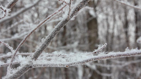 winter tree branch and snow close-up Footage