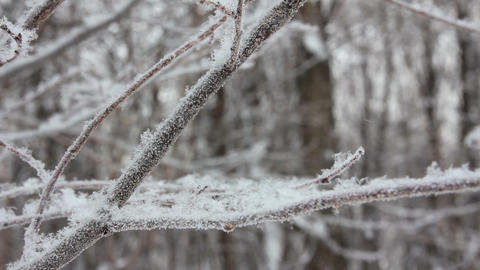 winter tree branch and snow close-up Stock Video Footage